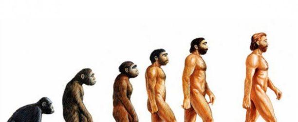 Evrim Nedir? Evrim Hakkında Her Şey…