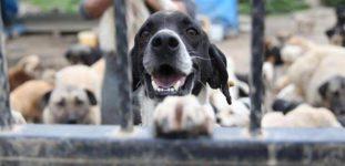 Yeni Hayvan Hakları Yasası Hangi Düzenlemeleri Getiriyor