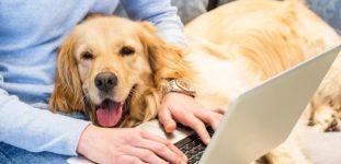 Evde Besleyebileceğiniz Köpek Cinsleri Nelerdir?