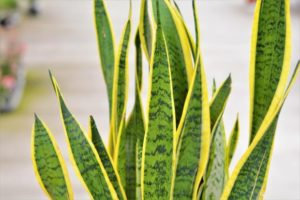 evde besleyebileceğiniz bitkiler