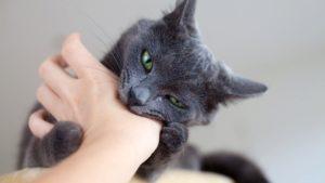 kedilerin davranışları ve anlamları