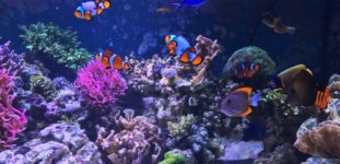 Akvaryumda Beslenebilecek En Güzel Balıklar