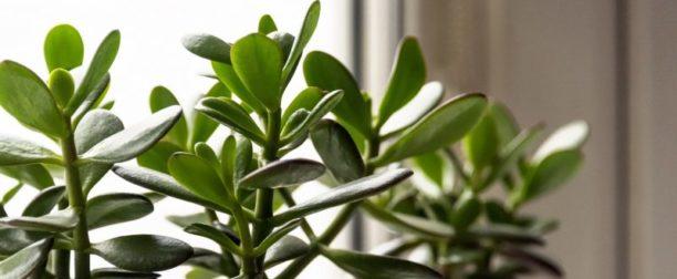 Evde Besleyebileceğiniz Bitkiler Nelerdir?